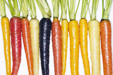 Several different colored whole carrots, top view.